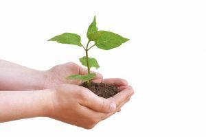 Piccoli gesti quotidiani per dare una mano all'ambiente