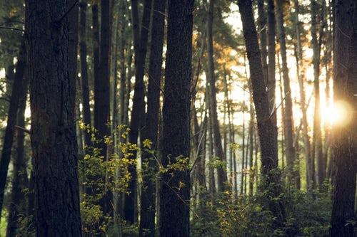 La giornata internazionale delle foreste