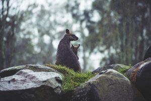 In Australia è arrivata la pioggia