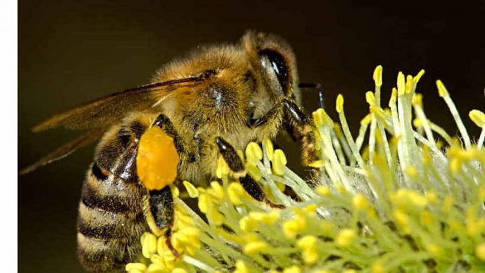 Proteggere le api piantando i fiori giusti