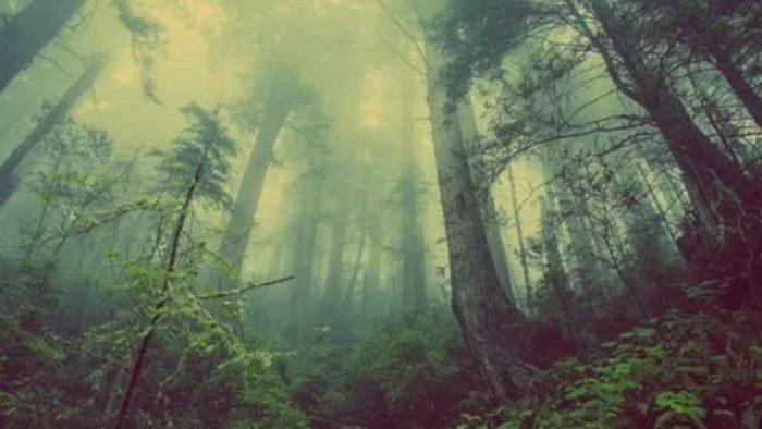 21 marzo, giornata mondiale delle foreste