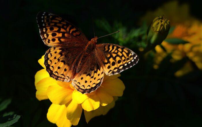 Oggi è la giornata della biodiversità