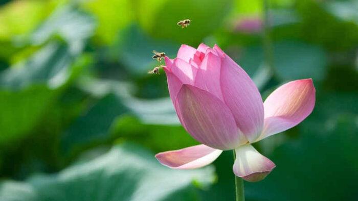 Oggi è il World bee day